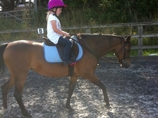 13. 2h show pony for sale