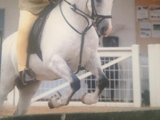 Welsh Section B - Ideal 2nd Pony