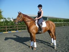 Must Go!!! 16. 2hh Allrounder/hunting Horse