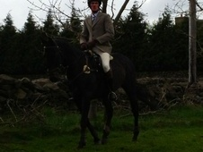 All Rounder horse - 5 yrs 1 mth 15.3 hh Bay - West Yorkshire