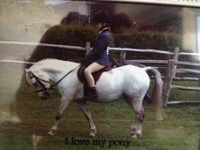 11. 2hh welsh mare