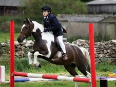 Pony Club Ponies horse - 6 yrs 13.2 hh Skewbald - Avon
