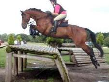 Smart Eventer All Rounder For Sale