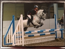 AMAZING MARE FOR SALE!
