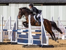 Sharer Wanted For 15hh Eventer