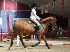 13. 2 Welsh Cob Cross Mare