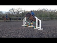 All Rounder horse - 6 yrs 16.0 hh Bay - Cheshire