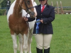 All Rounder horse - 9 yrs 14.2 hh Coloured - Lancashire