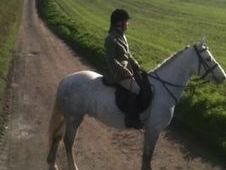 All Rounder horse - 6 yrs 14.2 hh  - Laois