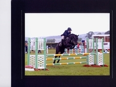 Talented Allround Competition Pony