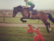 Bargain 15. 2 Irish Sports Horse