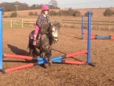 All Rounder horse - 7 yrs 13.0 hh Grey - Nottinghamshire