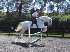 All Rounder Gelding / East Sussex