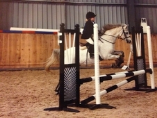 All Rounder Pony For Sale, 16 Y. O 12. 2 Hh