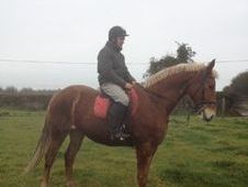 All Rounder horse - 6 yrs 16.1 hh  - Laois