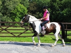 Ideal allrounder and pony club prospect