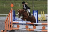 Pony Club Ponies horse - 12 yrs 12.2 hh Chestnut - Kent