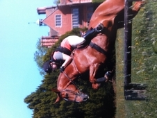 16. 3hh Superstar For Sale