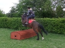 All Rounder horse - 8 yrs 14.0 hh Bay - Nottinghamshire
