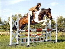 All Rounder horse - 6 yrs 10 mths 16.1 hh Skewbald - Gloucestershire