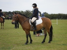 All Rounder horse - 8 yrs 10 mths 13.2 hh Bay - Kent