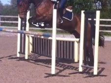 All Rounder horse - 10 yrs 1 mth 16.2 hh Bay - Kent