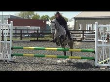 All Rounder horse - 7 yrs 14.1 hh  - Hampshire