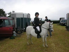 Pony Club Ponies horse - 13 yrs 12.0 hh Grey - Dyfed