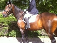 Family horse - 10 yrs 16.2 hh Bay - Hampshire