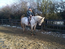 All Rounder horse - 10 yrs 11 mths 15.2 hh Grey - Essex