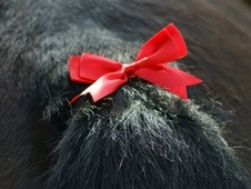Satin Ribbon Tail Bows