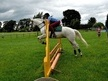All Rounder horse - 6 yrs 14.2 hh Grey - Clwyd