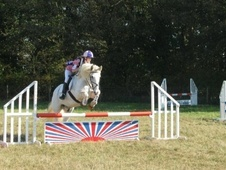 Cobs horse - 14 yrs 14.2 hh Blue & White - Essex