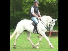 All Rounder horse - 7 yrs 0.0 hh  - Dorset