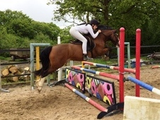Popple Sect C 6yro Potential WHP Gelding