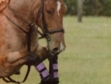 All Rounder horse - 13 yrs 13.0 hh Bay Roan - County Durham
