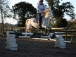 Show Jumpers horse - 7 yrs 12.1 hh Grey - Kent