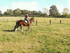 Bonnie 14h Super Family Pony £1995