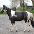 HUGO BOSS OUR PIEBALD HOMOZYGOUS SPORT-HORSE STALLION COLT (born 2011)