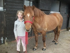 All Rounder horse - 8 yrs 12.2 hh Chestnut - West Midlands