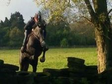 All Rounder Horse - 7 Yrs 15. 3 Hh - Kent