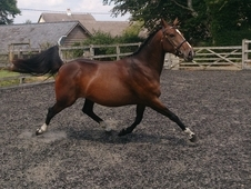 Beautiful Mare With Top Potential