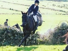 Freelance rider available in Gloucestershire