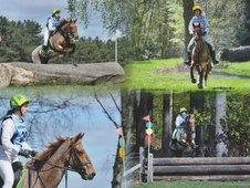 Pony Club Ponies horse - 16 yrs 3 mths 13.2 hh Strawberry Roan - ...