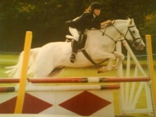 Family horse - 20 yrs 4 mths 14.1 hh Grey - Northamptonshire