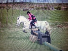 All Rounder horse - 7 yrs 11 mths 15.2 hh Grey - County Durham