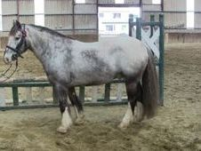 All Rounder horse - 9 yrs 14.2 hh  - Laois