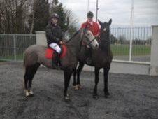 All Rounder horse - 6 yrs 15.3 hh  - Laois