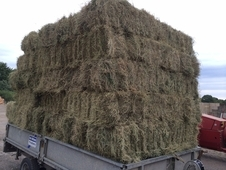2014 Conventional Hay Bales For Sale