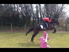 All Rounder horse - 4 yrs 15.2 hh Bay - Kent